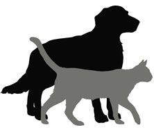 Black Cat Names | Image of a cat and a dog